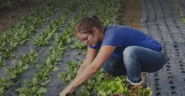 """Montpellier est engagée dans une politique de transition agroécologique et alimentaire, pour renforcer l'articulation entre """"bien manger"""" et """"bien produire"""" (P2A)."""